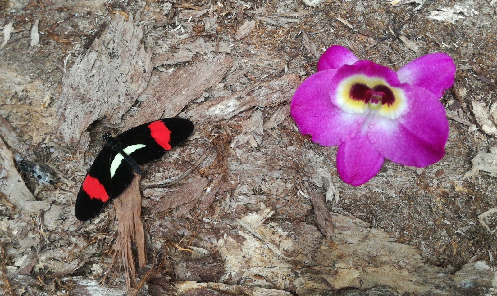 Travel with me: Orchids, butterflies and… parrots?