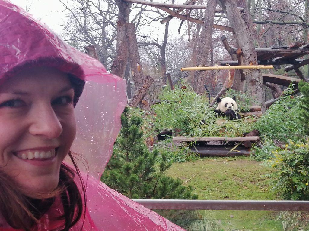 berlin znamenitosti berlina živalski vrt panda