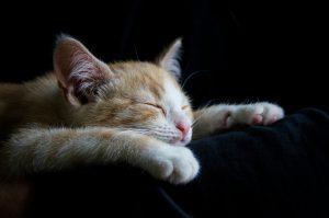 Utrujenost ščitnica
